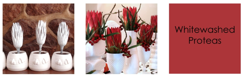 Tutorial - Freshly Found Book white washed proteas -1 copy